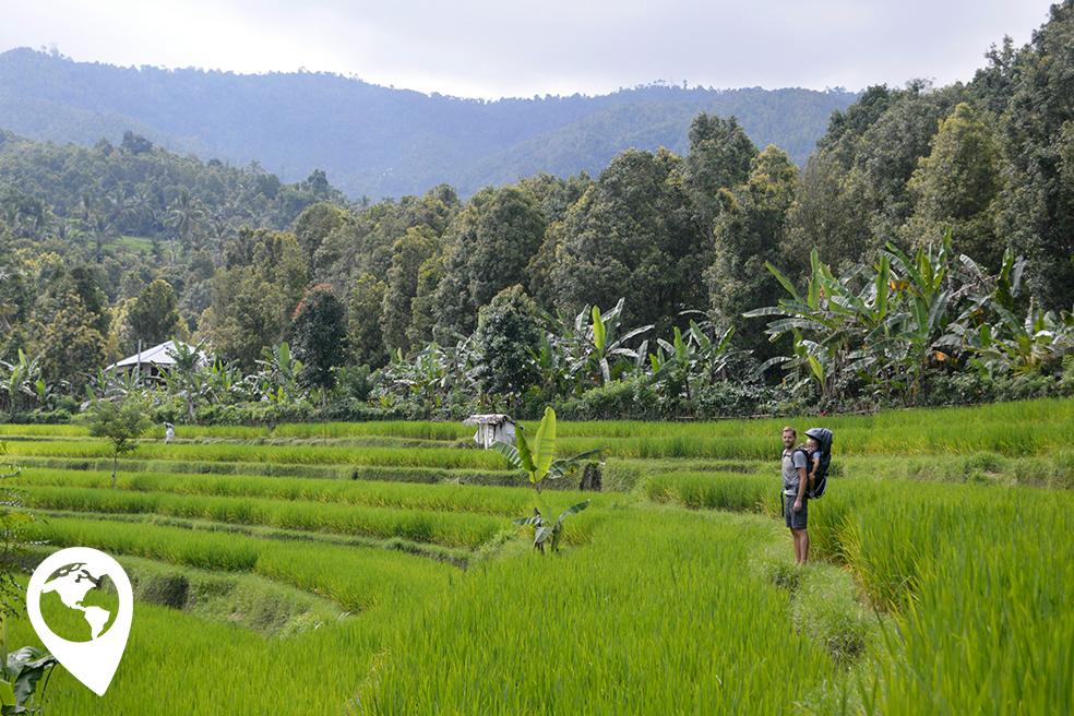 bali-munduk-rijstvelden
