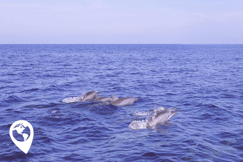 dolfijnen spotten op Bali met Made's beautiful fish