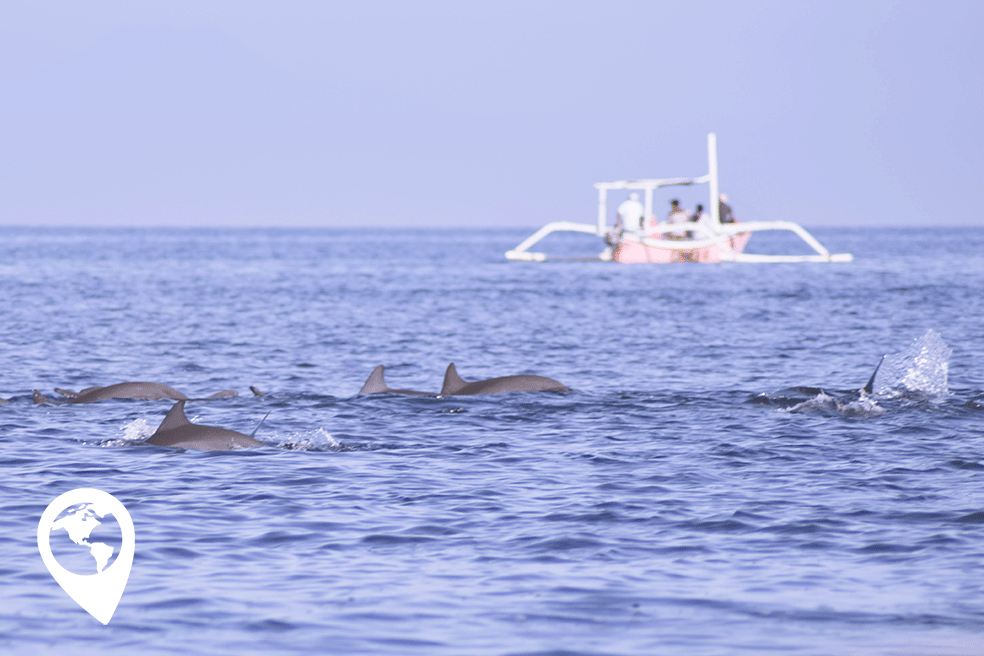 Bali met kinderen, dolfijnen in Lovina