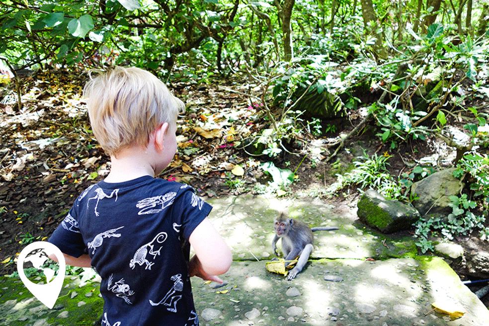 Ubud met kinderen Monkeyforrest