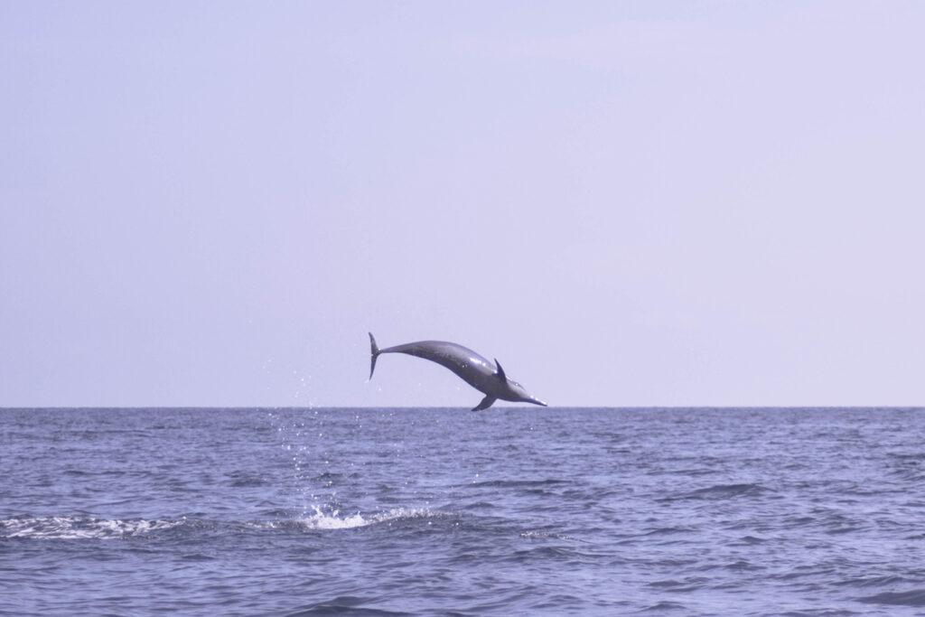 Verantwoord dolfijnen spotten op Bali