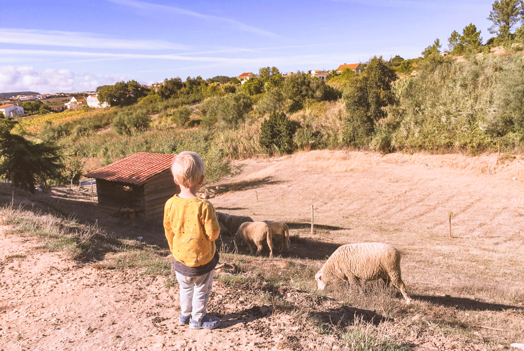 Quinta Laranja: walhalla voor gezinnen op het Portugese platteland