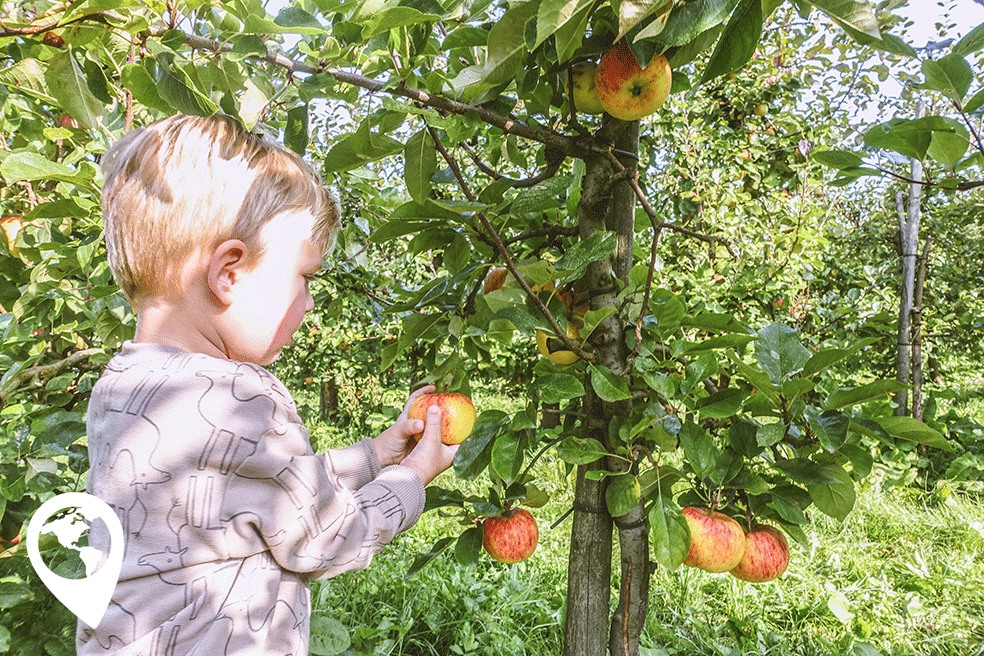 appels plukken bij landgoed de Olmenhorst
