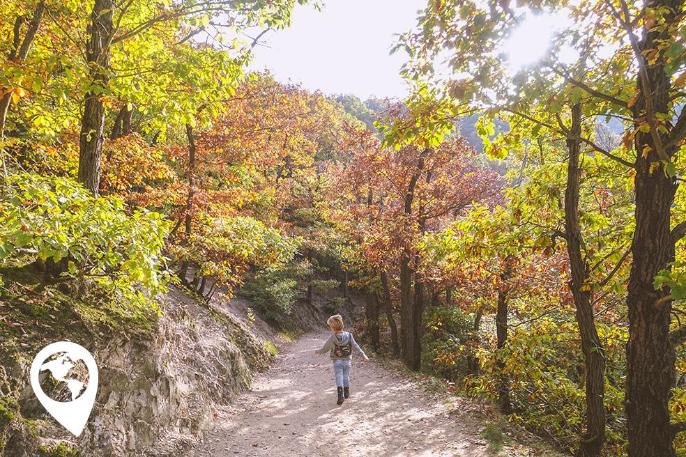 Burg Eltz met kinderen - bos