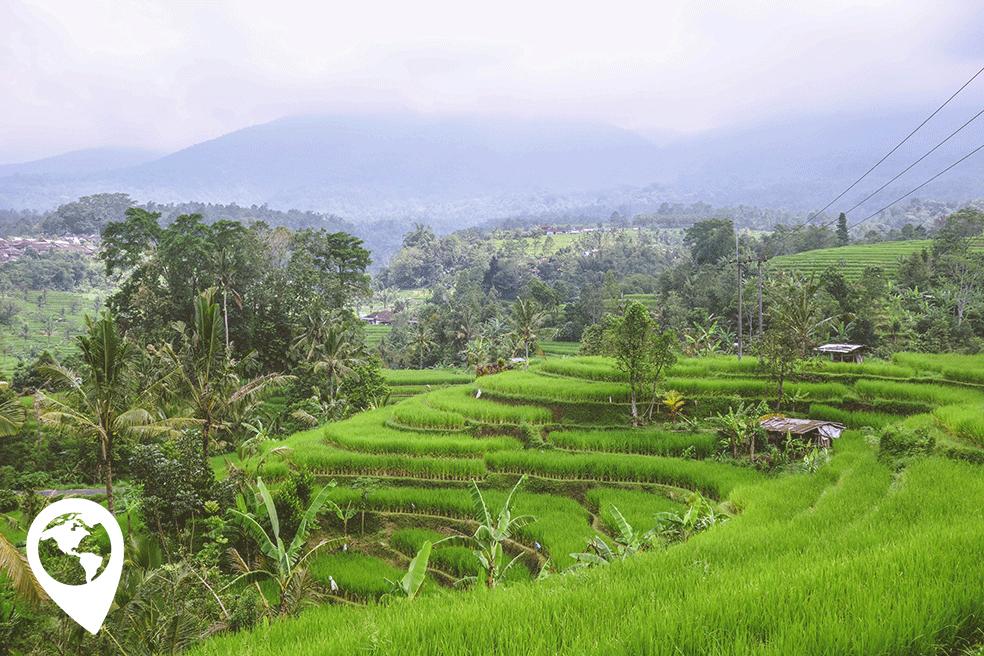 traveltag - Jatiluwih rijstvelden