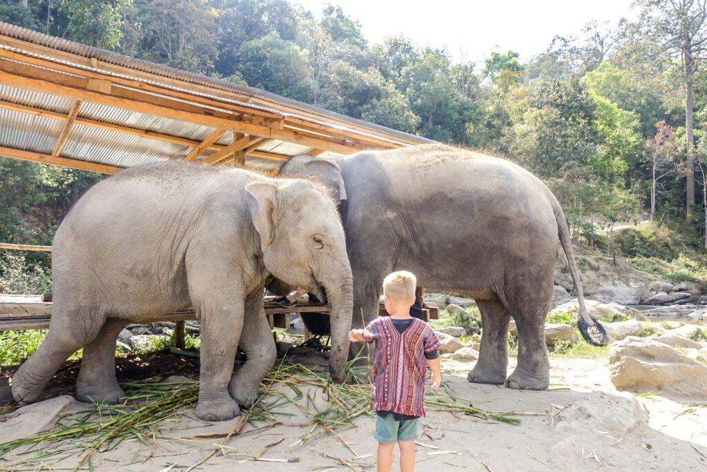Week 7: olifanten in het hoge noorden