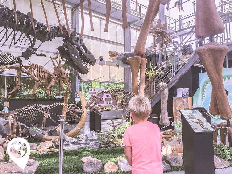 oertijdmuseum-binnen-dino-skelet