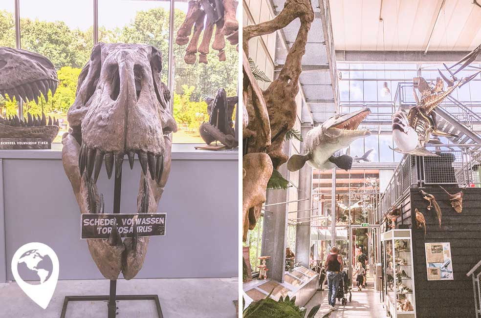 oertijdmuseum-binnen