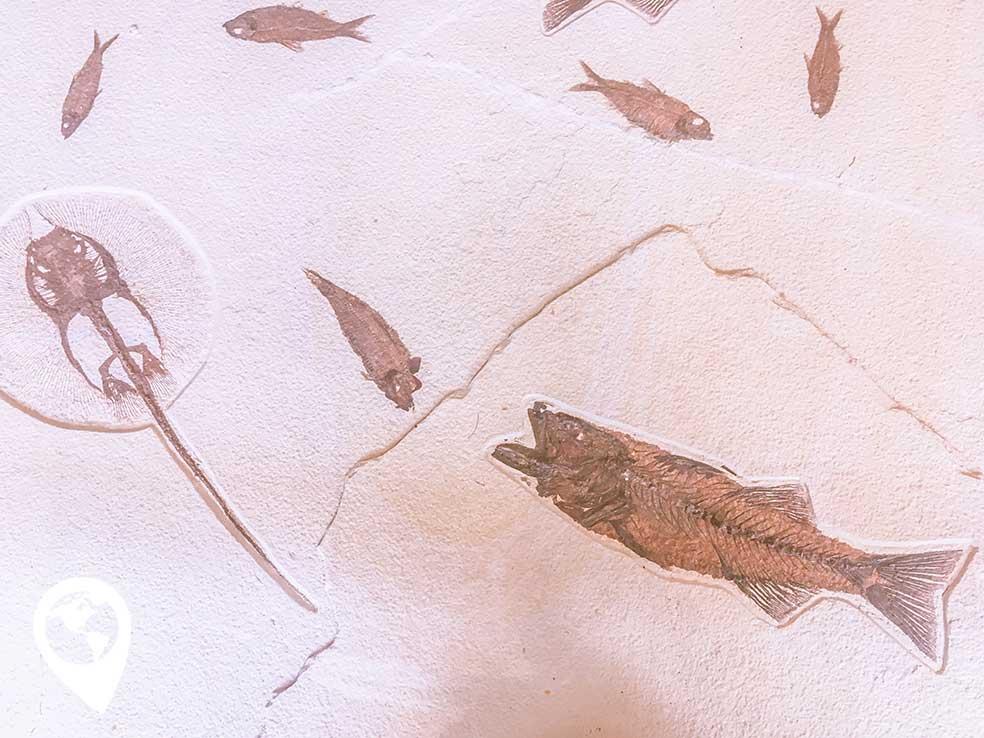 oertijdmuseum-fossielen