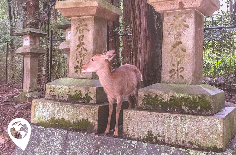 Rondreis Japan met kinderen - dagtrip naar Nara