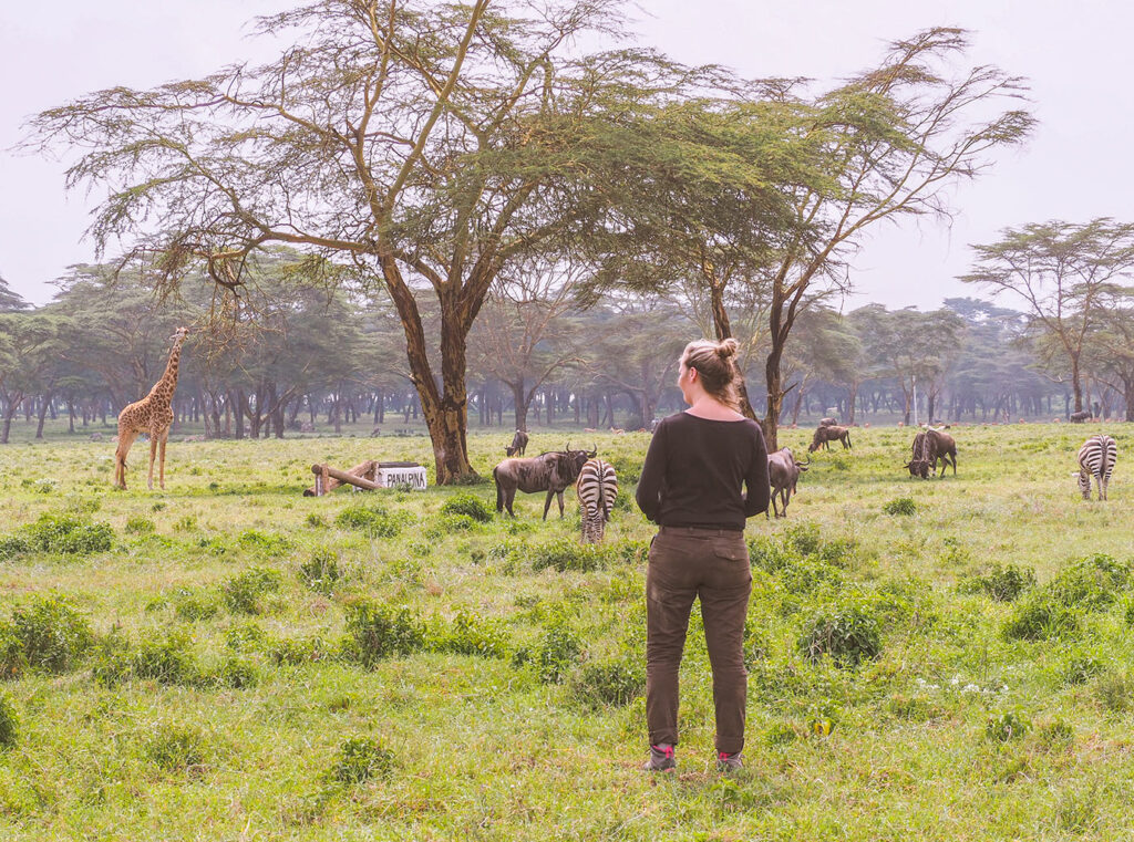 Lake Naivasha met kinderen – 3 x op safari