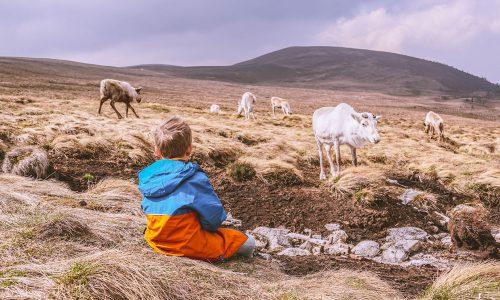 cairngorms-nationaal-park-met-kinderen
