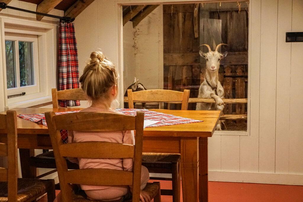 Kindvriendelijke hotspot: slapen met twee geiten in Drenthe
