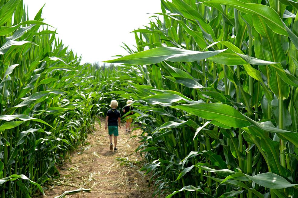 Twente met kinderen - Groot Twentsch maïsdoolhof in Fleringen