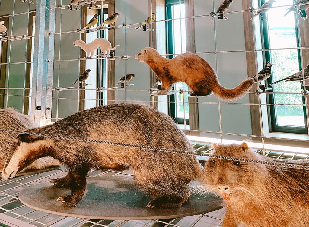 Bosdieren in LiveScience, Naturalis