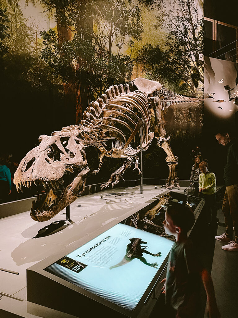 Trix, de T-rex in Naturalis